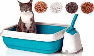 Как выбрать кошачий наполнитель для туалета