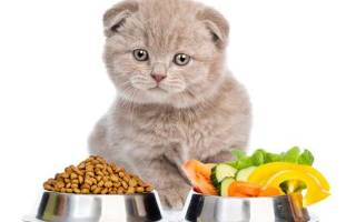 Чем кормить котенка: руководство для новичков