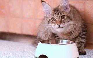 Питание мейн-куна: составляем рацион для кошек и котят