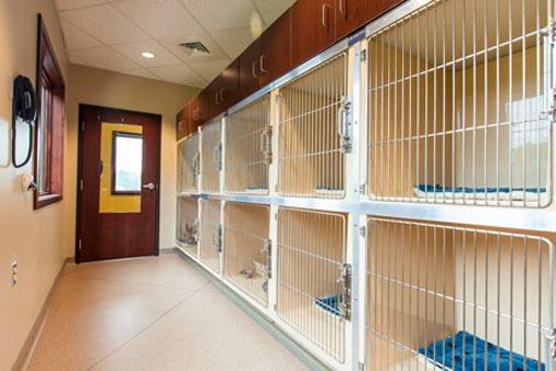 Содержание кошек в клинике