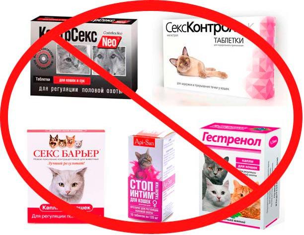 Запрещенные таблетки для кошек