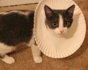 Воротник для кошки из пенопласта