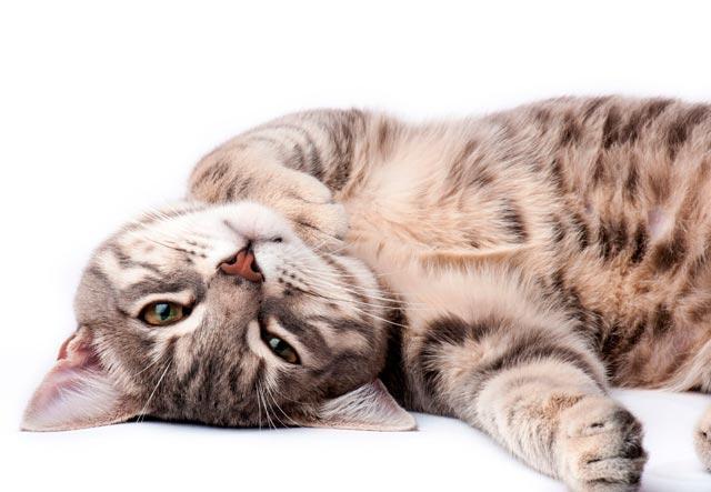 Ласковый кот