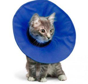 Котенок в тканевом воротнике