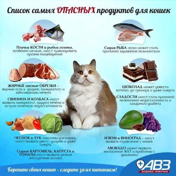 Запрещенные продукты для кошки