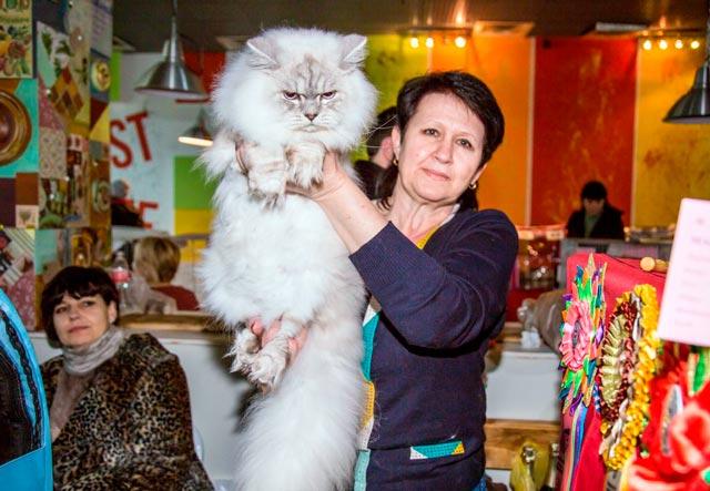Британская длинношерстная белая кошка на выставке