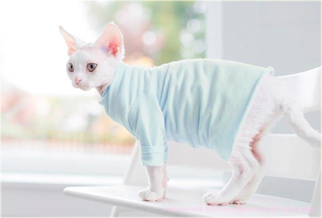 Одежда для сфинкса