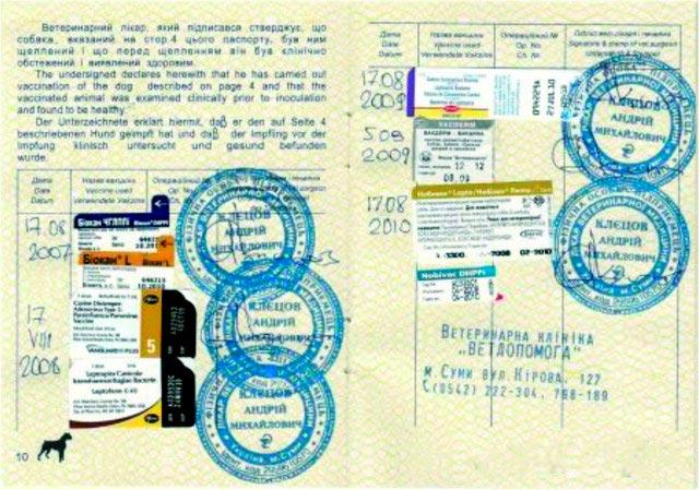 Ветеринарный паспорт с отметками о прививках