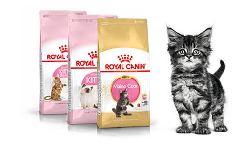 Корм Royal Canin kitten