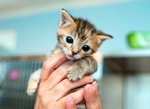 Чем кормить котенка в 1 месяц