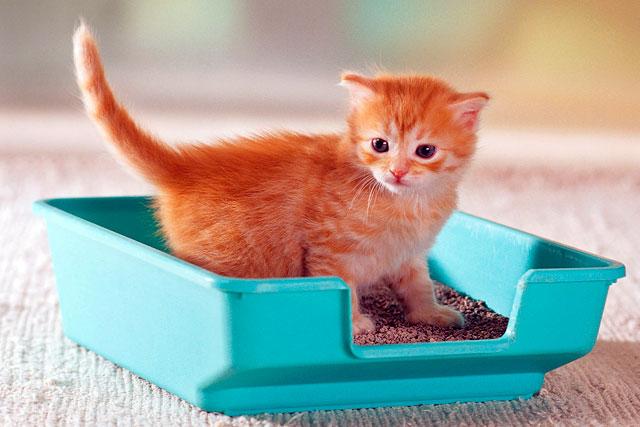 какой кошачий наполнитель лучше